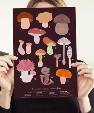 Identifier-et-reconnaître-les-champignons-comestibles